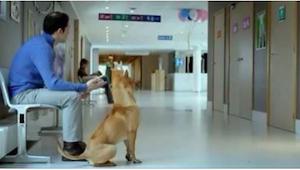 Pes a jeho majitel trpělivě čekají před dveřmi na porodním oddělení. Důvod vás p