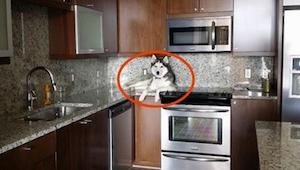 Majitel si všimnul, že jeho pes se chová divně. Když se podíval blíž, uvědomil s