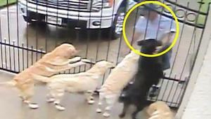 Skrytá kamera natočila, co listonoš každé ráno dělá se psy. Toto video je senzac