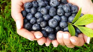 Důvodů, proč začít jíst borůvky. Toto ovoce dokáže zázraky!