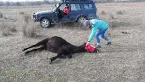Muž osvobodil spoutaného koně. Reakce zvířete si získala srdce lidí z celého svě