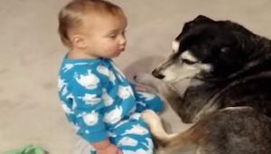 Chlapeček potřebuje přitulit psa, ale je velmi ospalý. Konec je neskutečně rozto