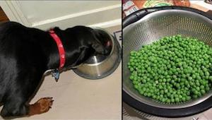 9 nejzdravějších produktů, které nepodáváte svému psovi - a měli byste!