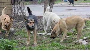 Učitel se vracel domů, když jeho pozornost upoutali toulaví psi…