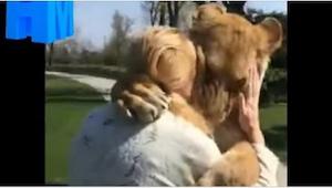 Žena se starala o lvice, ale pak je musela vrátit do ZOO. To, jak ji pozdravili