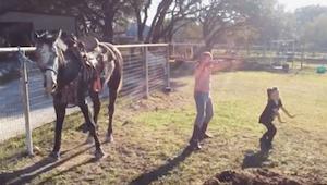 2 dívky začnou tančit, pozorně ale sledujte koně, který na sebe strhne všechnu p