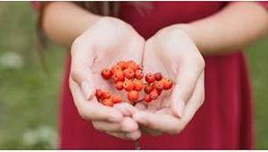 Stačí jíst 3 plody jeřabiny denně a ve vašem organizmu začnou tyto změny.