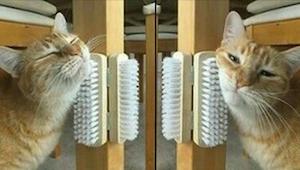 Umírá vaše kočka nudou? V tom případě máme pro vás 9 užitečných triků!