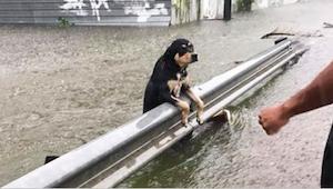 Během strašlivé bouře nechali majitelé své psy napospas smrti. Tyto fotografie š
