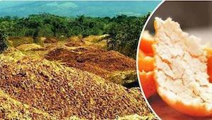 Na poušti vyhodili 1000 ton slupek od pomerančů. O 16 let později výsledek šokuj