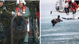 Pes skáče z helikoptéry do hluboké vody. Neuvěřitelné video!
