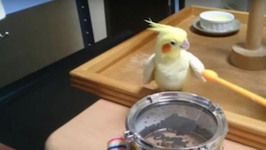 Tenhle papoušek má výjimečný talent. Sledujte, co dělá, když se objeví malinký b