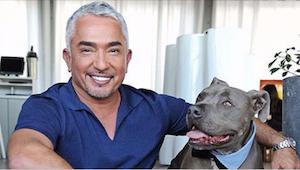 Proč Caesar Milan nikdy nekřičí na své psy? Zjistěte, co doporučuje expert na ps