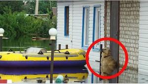 Když uvidíte, co tento pejsek dělal během povodně, dojdou vám slova!