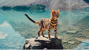 12 neobyčejných fotografií kočky - cestovatelky! To je ale život!