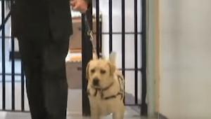 Voják vchází se psem do vězení. Sledujte, jak zareaguje zvíře, když uvidí TUTO ž