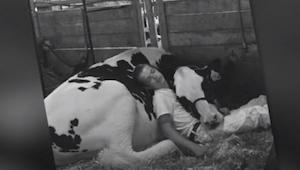 Chlapec už odmalička vychovává svou krávu. Pouto, které zachytil na jejich spole