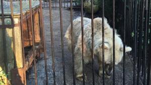 Medvěd strávil v kleci 30 let. Jeho reakce, když se dostal na svobodu, mě dohnal
