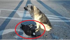 Kamarádství těchto 2 psů dojalo lidi z celého světa!