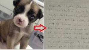 """Rodiče způsobili své dceři trauma jen proto, že pes není """"čistokrevný""""… Nemáme s"""