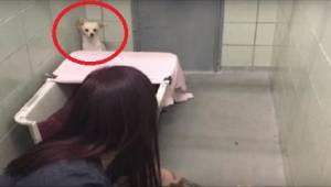 Vyděšený pes se choulí v koutě, ale když uvidí, co v rukou drží dobrovolnice, za