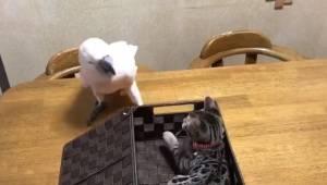Papoušek si chce hrát s koťátkem, ale to se chce prát… reakce papouška nemá chyb