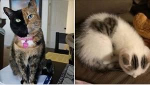 15 koček, které vás překvapí tím, jak vypadají…