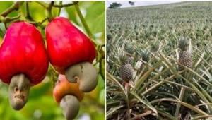 Chcete vědět, jak rostou ananasy, chřest nebo kiwi? Je to opravdu zajímavé!