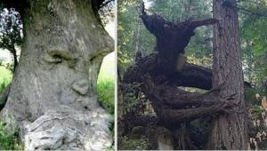 Příroda dokáže být neuvěřitelná! Podívejte se na 20 nejzvláštnějších stromů svět