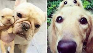 20 fotek psů a jejich věrných kopií. Číslo 5 vás dostane!