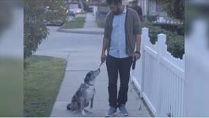 Muž adoptoval opuštěného psa. Jednoho dne pejsek na procházce přestane reagovat