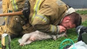 Hasič z hořícího domu vynesl mrtvého psa. O několik vteřin později všichni plaka