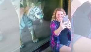 Za těhotnou ženou se objeví tygr. Když mu ukáže bříško, zareaguje neuvěřitelně s