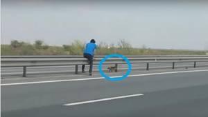 Na dálnici uviděl vyděšeného psa. Udělal pro něj něco, co si zaslouží uznání.