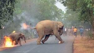 To, co se děje v Indii, je pro slony hotové peklo. Opravdu jim nikdo nedokáže po