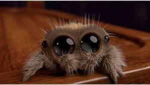 Pokud se bojíte pavouků… sledujte toto video!