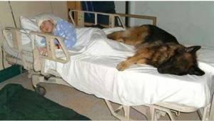 Před svou smrtí napsala za svého psa dojemný dopis. Když si ho noví majitelé pře
