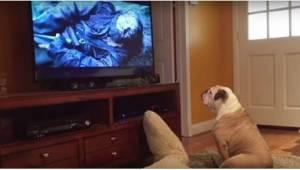 Pes klidně sledoval film, když se na obrazovce náhle objevil medvěd. Jeho reakce