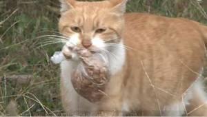 Toulavá kočka nechtěla jíst a vzala si jen jídlo zabalené do sáčku. Jednoho dne