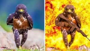 9 legračních fotografií s použitím Photoshopu, které dokazují, že kreativita nem