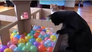 Pokud chcete, aby byla vaše kočka šťastná, darujte jí toto!