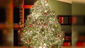 Tak kouzelný stromeček jste ještě neviděli!