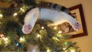 Nejlegračnější kompilace škodolibých koček, které odhalily vánoční stromeček.