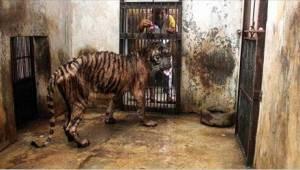 ZOO smrti – zvířata v ní umírají hlady!