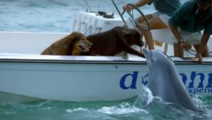 To, co udělal tento delfín, je úžasné! Sledujte!