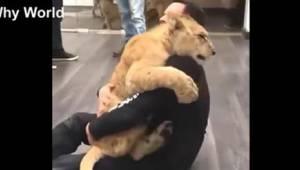 Tak dokáží milovat pouze zvířata! Sledujte toto výjimečné video!