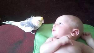 Když se vrátili z nemocnice s miminkem, nevěděli, jak zareaguje papoušek. Čekalo