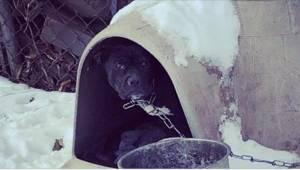 Když dobrovolníci uviděli tohoto psa, měli v očích slzy… a jeho majitelé tvrdí,