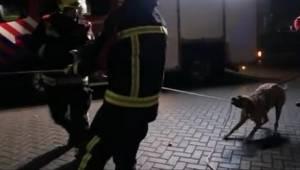 Vzal psa na procházku. Neměl tušení, že se jeho mazlíček stane jedním z hasičů…