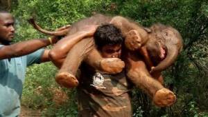 Muž zachránil sloní mládě, vzal ho do náručí a přinesl přímo k mámě.